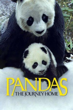 دانلود مستند کوتاه Pandas: The Journey Home