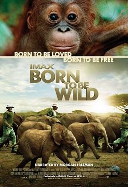 دانلود مستند کوتاه Born to Be Wild