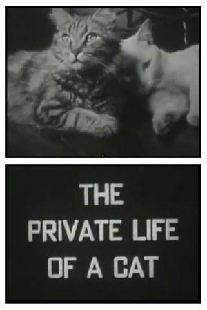 دانلود مستند کوتاه The Private Life of a Cat
