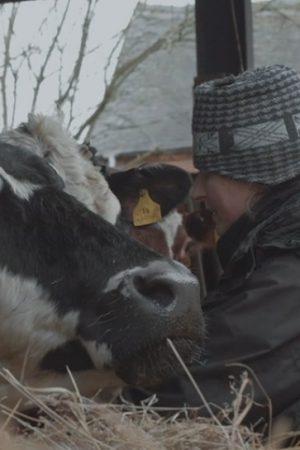 مستند کوتاه ۷۳ Cows
