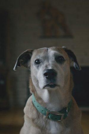 فیلم کوتاه Downward Dog