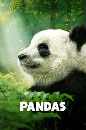مستند کوتاه Pandas